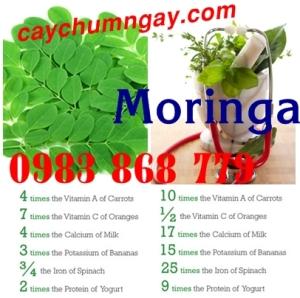 moringa (76)